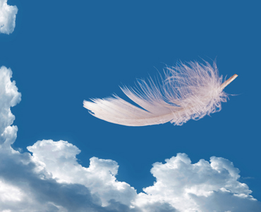 Floating feather over sky – lightness, freedom concept